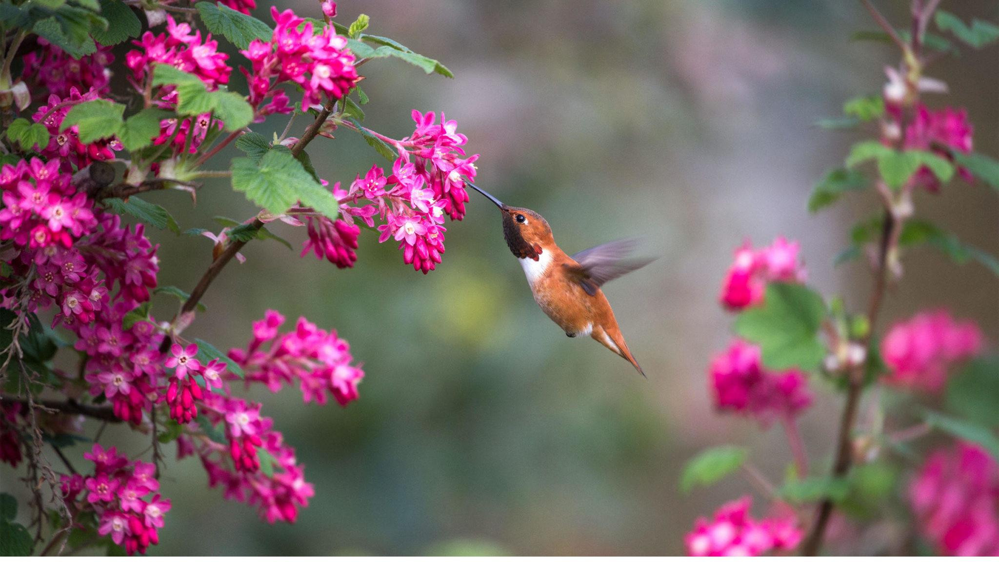 Bahar Yorgunluğuna Ne iyi Gelir Bitkisel Çözüm