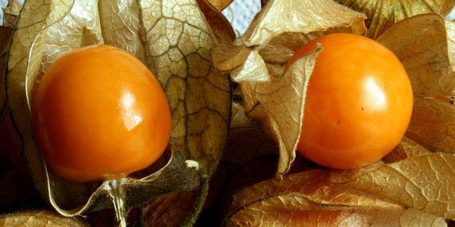 Altın Çilek Faydaları, Zararları Nelerdir ? Nasıl Tüketilmeli ?